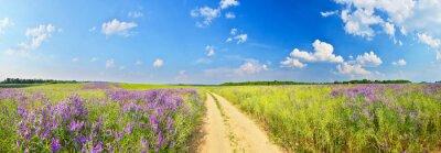 Lato drogowego wśród pól kwiatowych