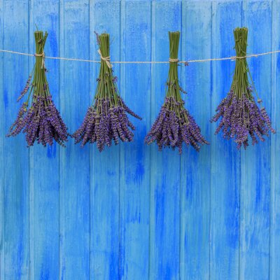 Naklejka Lavender zioła suszenia na drewnianej stodole w ogrodzie