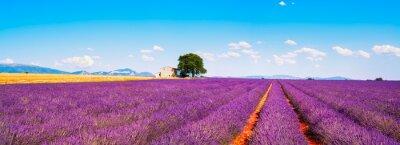 Naklejka Lawenda kwiaty kwitnące pola, dom i drzewa. Prowansja, Franc