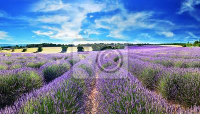 Lawendowe pole w letniej wsi