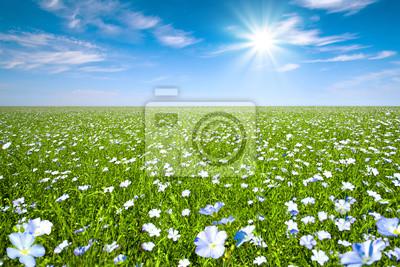 Len pole z błękitne niebo