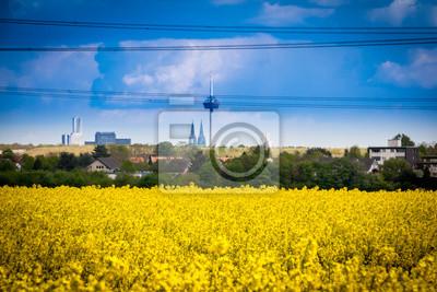 Leuchtend gelbes Rapsfeld mit Häusern und Stadt im Hintergrund - pole rzepaku