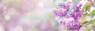 Naklejka Lilac flowers spring blossom, sunny day light bokeh background