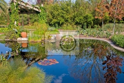 lily pond refleksje