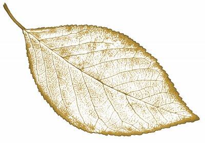 Naklejka liść natury izolowany