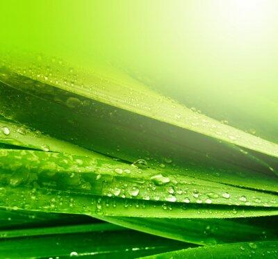 Naklejka liści trawy z kroplami wody