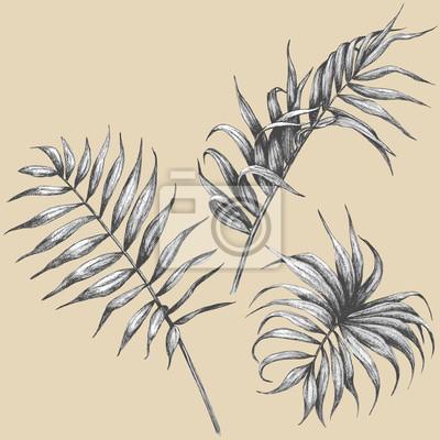 Liście roślin tropikalnych.