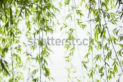 Naklejka liście wierzby