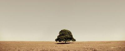 Naklejka Lone tree