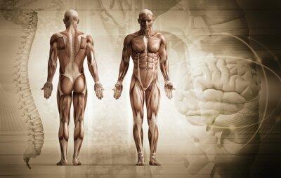 Naklejka Ludzkie ciało