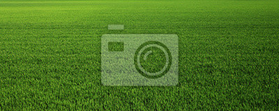 Naklejka Lush green grass meadow background