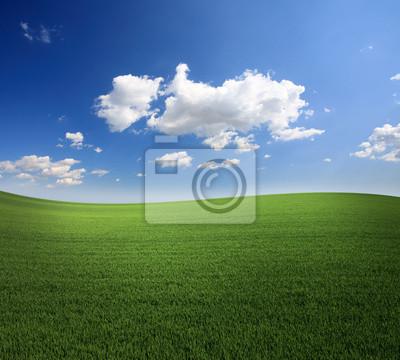 Lush zielona trawa i błękitne niebo chłodny