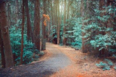 Naklejka Magiczny las w tle marzycielski