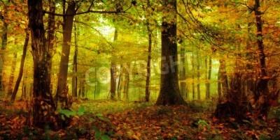 Naklejka Magiczny zaczarowany las zdjęcie złoty października