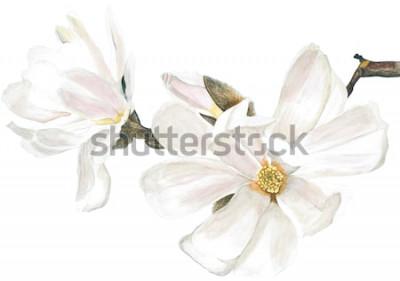 Naklejka Magnolia biała. Akwarela