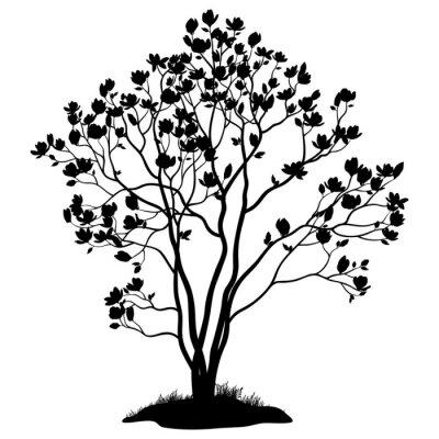 Naklejka Magnolia Drzewo z kwiatów i trawy Silhouette