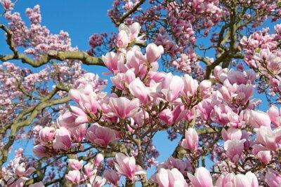 Naklejka Magnolia - Magnolia