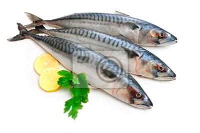 Naklejka makrela ryby