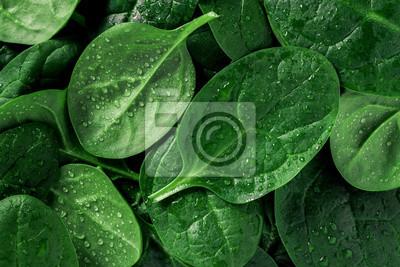 Naklejka Makro- fotografia świeży szpinak. Pojęcie żywności ekologicznej.