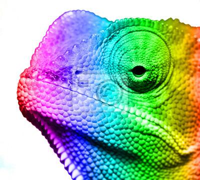 Naklejka Makro z wielu kolorowych cameleon