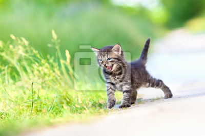 Mała miauczenie kotka chodzenia na piaszczystej drodze