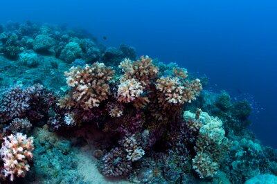 Naklejka Mała rafa koralowa w Mikronezji.