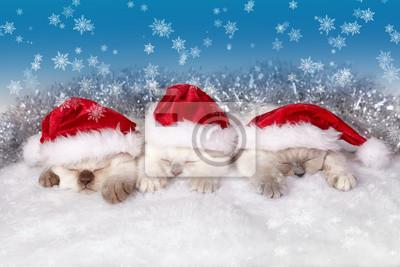 Małe koty na sobie kapelusz Mikołaja snem