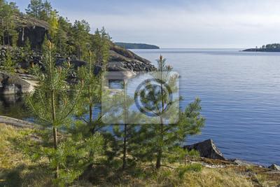 Naklejka Małe pines na brzegu jeziora Ładoga.