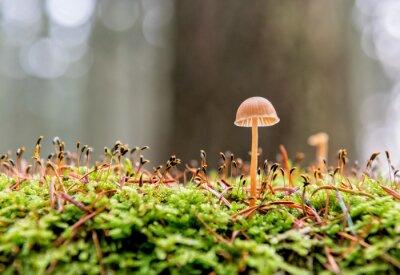 Naklejka mały grzyb