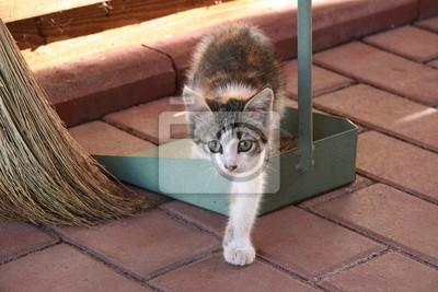 Mały kociak w pobliżu szufelki i miotły