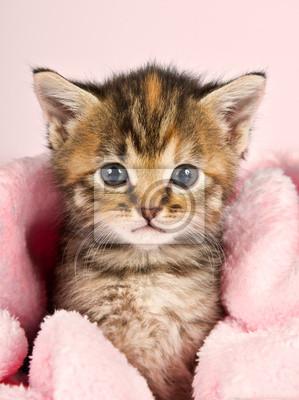 Naklejka Mały kociak zawinięte w różowy Banket