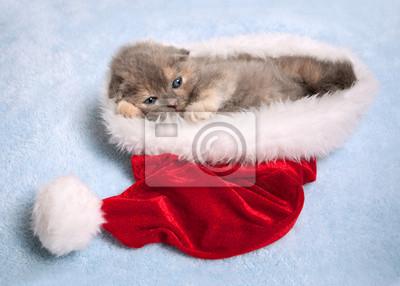 Mały kot leżący wewnątrz kapelusz Świętego Mikołaja