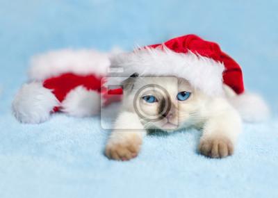 Mały kot na sobie kapelusz w Santa