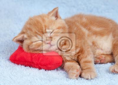 Mały kot śpi na czerwonym poduszkę w kształcie serca