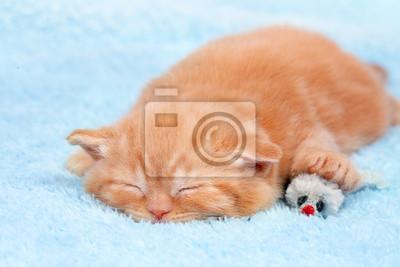 Mały kot śpi na niebieskim kocem z myszy zabawki