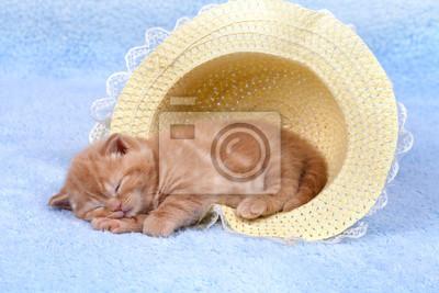 Mały kot śpi w słomkowym kapeluszu
