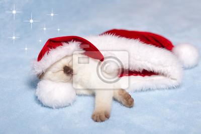 Mały kot śpi wewnątrz kapelusz Świętego Mikołaja