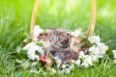 Mały kotek siedzi w koszu na trawie
