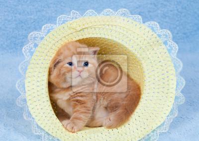 Mały kotek siedzi w słomkowym kapeluszu