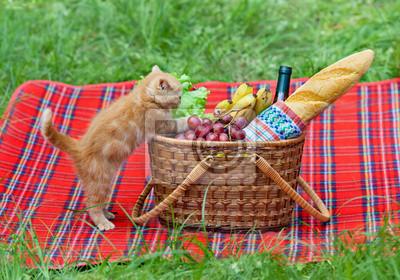 Mały kotek wąchania kosz piknikowy na zewnątrz