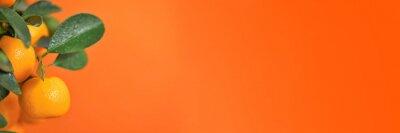 Naklejka Mandarin Banner.tangerine fruits on the branches. Citrus fruits banner. Mandarin bush on a bright orange background.Citrus fresh organic fruit.Organic  Natural Farm Fruits.Mandarin fruit banner