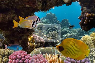 Naklejka Maskowane Butterfly ryb i raf koralowych