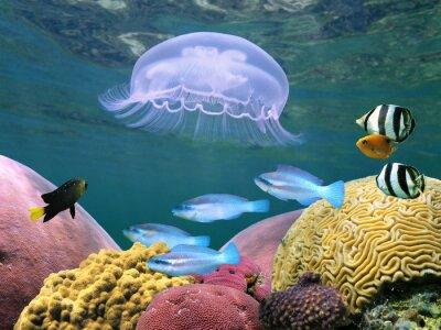 Naklejka Meduza z korali i ryb