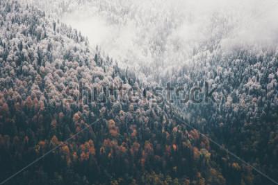 Naklejka Mglisty jesień las iglasty krajobraz widok z lotu ptaka tło Podróż spokojny widok sceniczny