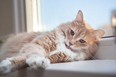 Naklejka miękki puszysty kot imbir leżąc na parapecie