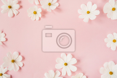 Naklejka Minimal styled concept. White daisy chamomile flowers on pale pink background. Creative lifestyle, summer, spring concept. Copy space, flat lay, top view.