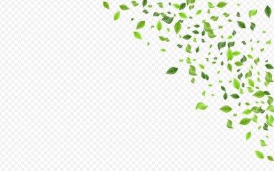 Naklejka Mint Leaf Forest Vector Transparent Background