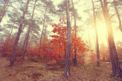 Naklejka Misty rano jesienią w kolorowym lesie