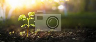 Naklejka Młoda roślina w świetle słonecznym, Rosnąca roślina, Sadzonki roślin