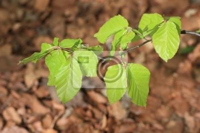 młodych liści gałęzi